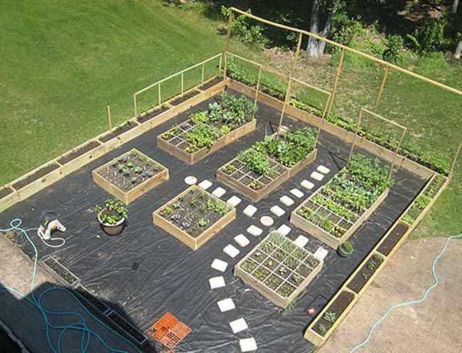 como organizar un jardin de plantas